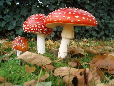 Виды грибов и симптомы отравления