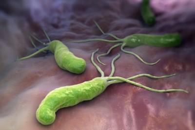 Подробно о бактерии