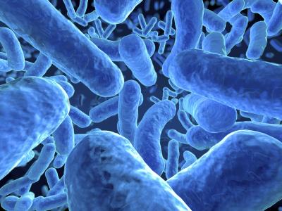 Микроорганизмы кишечника
