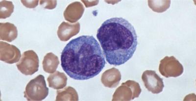Белые кровяные клетки фото