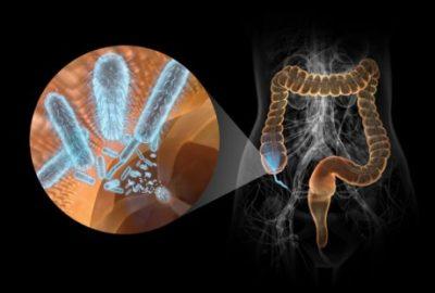 Важность этого отдела кишечника для иммунитета фото