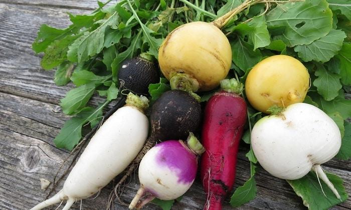 При панкреатите запрещено употребление, репы, редиса, редьки, шпината и щавеля, зеленого лука