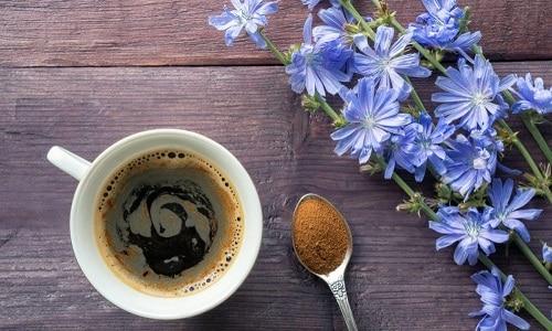 Высокого качества цикорий может не только стать заменой кофе, но и принести пользу всему организму, ускорить процесс выздоровления
