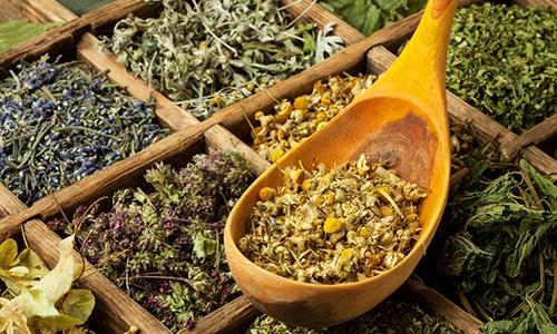 Лекарственные травы могут использоваться при лечении изменений контуров поджелудочной железы только в том случае, если они были вызваны панкреатитом