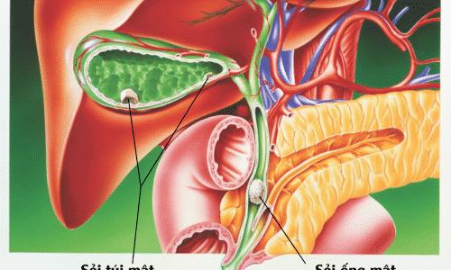 Панкреатический сок отводится по мельчайшим трубкам, которые вливаются в более крупные протоки, а затем в единый канал (вирсунговый)