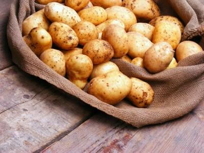 Картошку любят за прекрасный вкус и питательные, полезные свойства