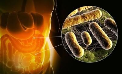 Нарушение равновесия в микрофлоре организма приводит к состоянию, называемому дисбактериоз, симптомы которого могут быть крайне неприятны