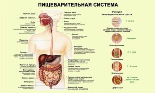 Врачи используют понятие «желудочная колика», которое определяет характер болей не только в желудке и полости брюшины