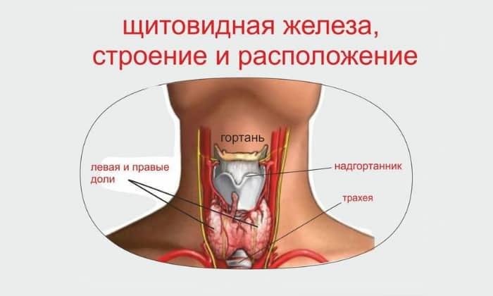 Щитовидная железа имеет повышенную функцию и вырабатывает очень много гормонов. В таком случае понос не проходит в среднем 3 дня и беспокоит человека достаточно часто с небольшими перерывами