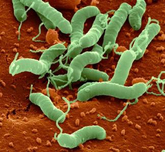 Бактерия Хеликобактер Пилори живет в желудках почти 70% населения земного шара, а вот больных гастритом хоть и много, но на несколько порядков ниже