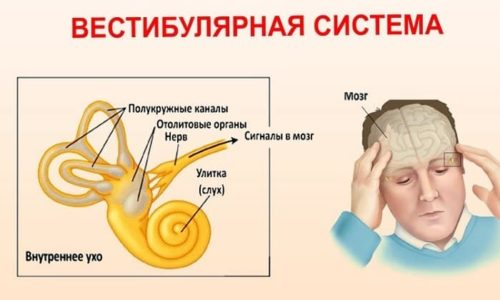Нарушение вестибулярного аппарата, отвечающий за равновесие и правильную ориентацию в пространстве, вызывает головокружение и тошноту