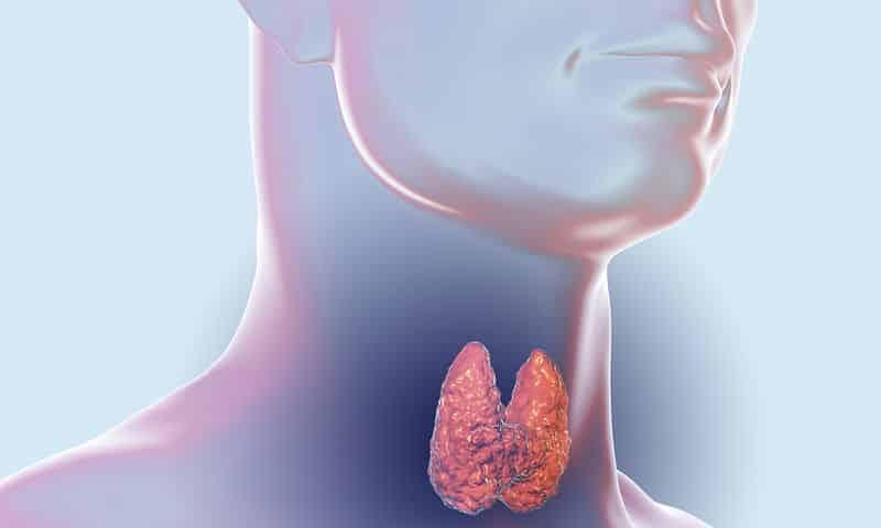 Заболевания щитовидной железы может стать причиной таких симптомов как понос и боли в животе