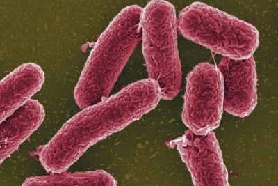 Бактериальный перитонит возникает в результате проникновения в стерильную брюшную полость жизнеспособных бактерий