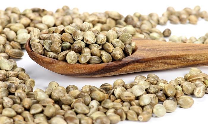 Семена конопли эффективны в борьбе с постоянной изжогой. Принимать такой препарат нужно в сыром виде - всего по 1 ст. л. четырежды в сутки