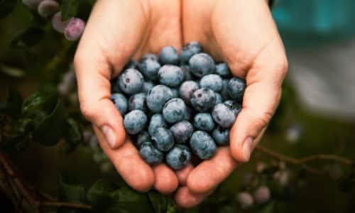 Панкреатит лечат черничным отваром. Нужно взять 1 столовую ложку ягод и залить 1 стаканом воды. Затем проваривать на протяжении 5-7 минут