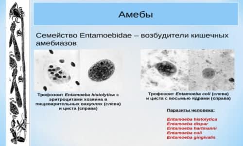 Амебиаз кишечника, без должного лечения, может привести к тяжелым последствиям, а возможно и к летальному исходу