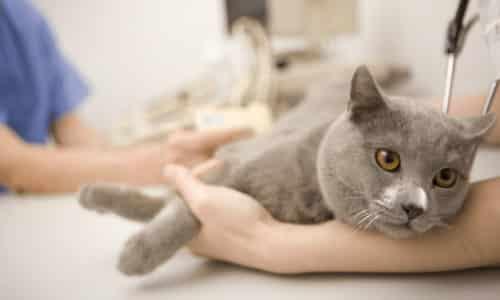 Кошки и другие животные также страдают заболеваниями желудочно-кишечного тракта