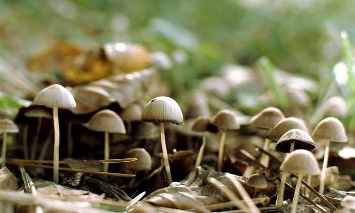 Бледная поганка. считается самым ядовитым. Более 50% людей, отравившихся данным грибом, умирает