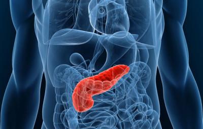 Клетки поджелудочной железы вырабатывают богатый на ферменты, используемый во время пищеварения панкреатический сок