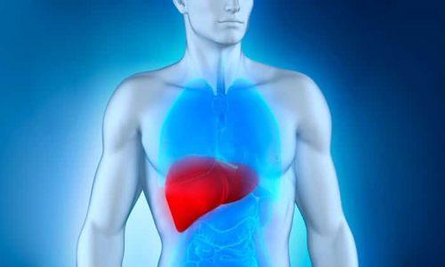 Самой большой пищеварительной железой в организме является печень. Она обезвреживает опасные токсины, участвует в обмене веществ.