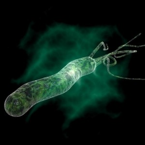 Язвенная болезнь возникает из-за того, что активно развивается бактерия Хеликобактер пилори