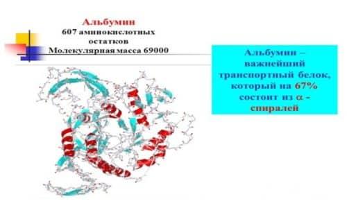 Больше половины белков крови - альбумины. Составляют около 55 - 60% от всего количества