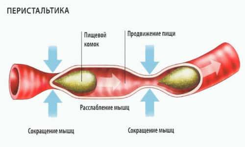 Атонией кишечника называется потеря тонуса органа и понижение его перистальтики