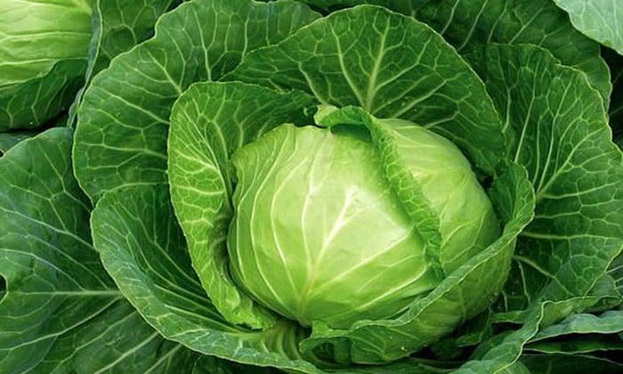 При соблюдение диеты нельзя употреблять капусту
