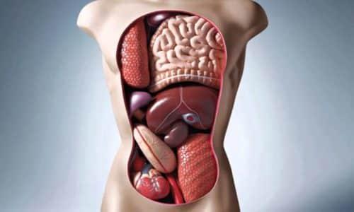 Липаза вырабатывается несколькими внутренними органами. Но разные органы придают различные свойства вырабатываемым веществам