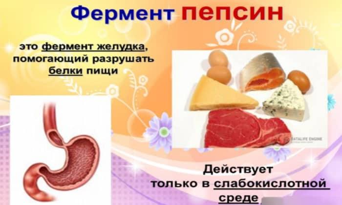 Могут назначить пепсин он заменитель желудочного сока, поднимающие уровень кислотности