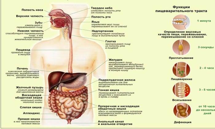 Медикамент улучшает переваривание пищи