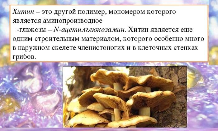 В состав грибов входит хитин. Это углевод, относящийся к полисахаридам. Человеческий организм не усваивает его
