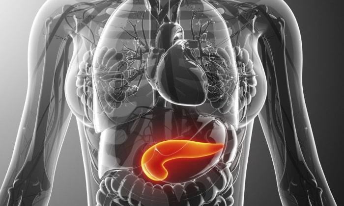 Эндокринная, или внутрисекреторная, часть железы отвечает за участие органа в обмене веществ