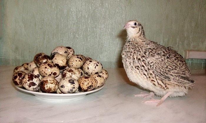3 яйца перепелов необходимо для приготовления суфле из овощей