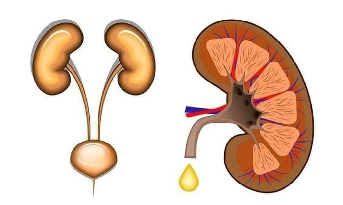 Симптом пиелонефрита может напоминать проявление болезней поджелудочной