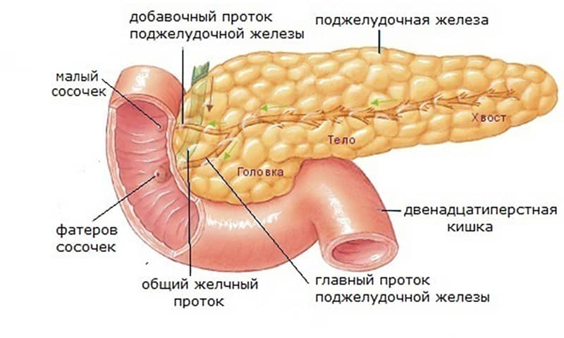 Кисель подавляет процессы секреции, предотвращая приступы панкреатита