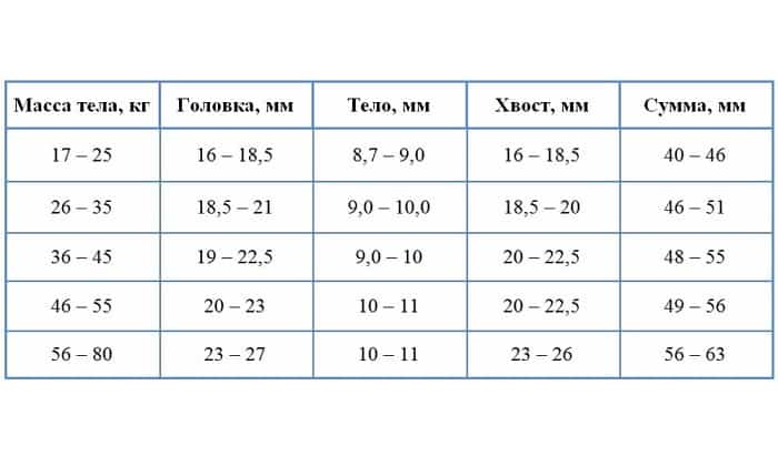 Размеры поджелудочной в соответствии с весом человека