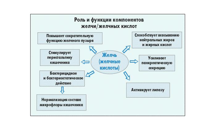 Фермент Энтерокиназа эффективно принимает участие в пищеварении лишь в случае, когда в просвете кишки имеется достаточное количество желчи