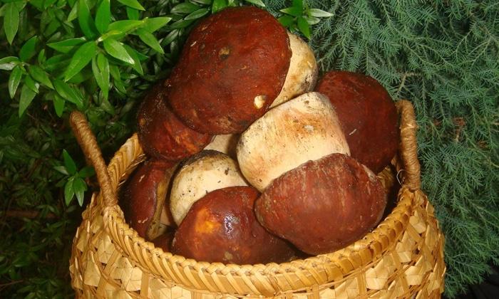 При уплотнении поджелудочной грибы запрещены