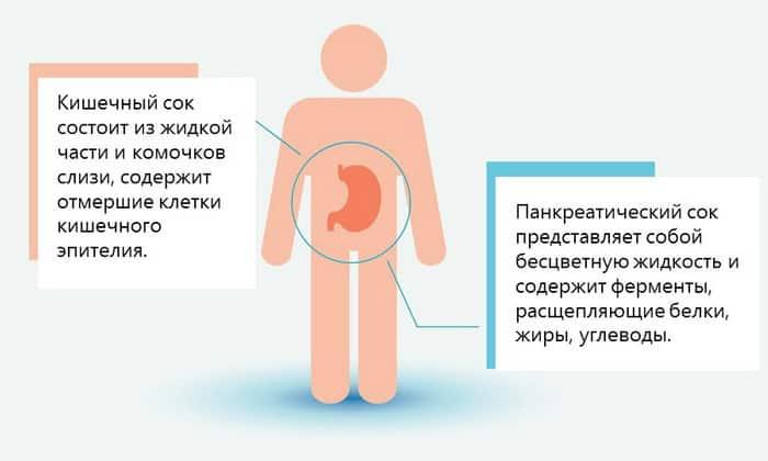 Экскреторная регуляция органа предполагает обеспечение оптимальным количеством панкреатического сока для переваривания еды