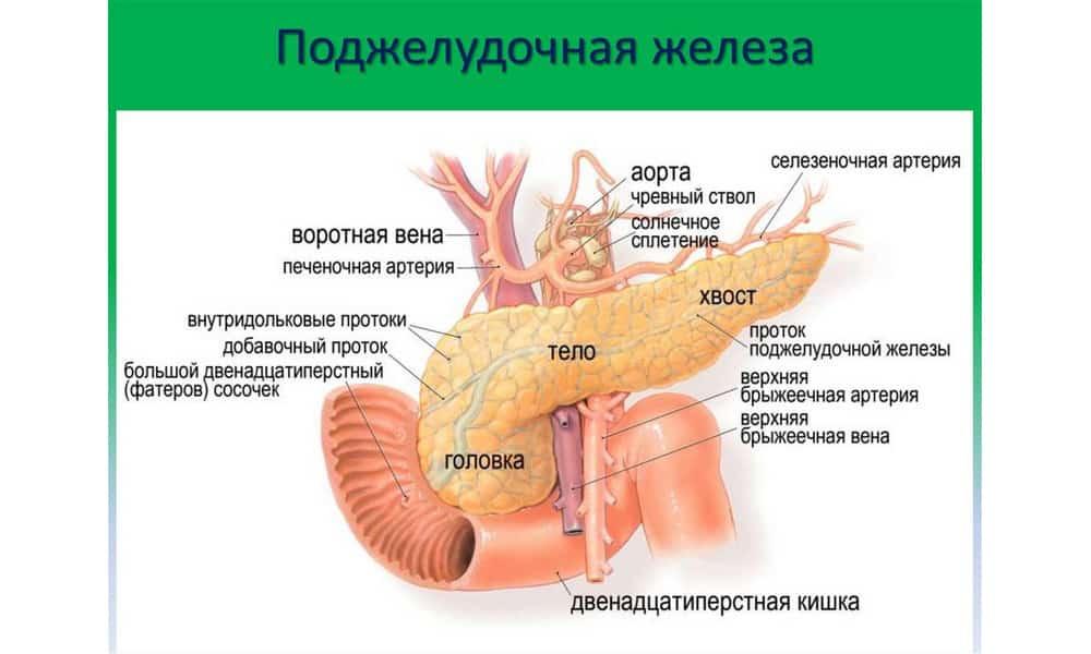 Метастазы в поджелудочной возникают реже, нежели в печени, головном мозге и других органах
