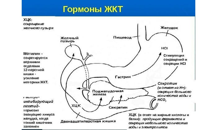 Предназначение гормона секретина - регулировка количества поступающей панкреатической жидкости. Активация гормонов происходит с помощью кислоты, которая поступает из желудка