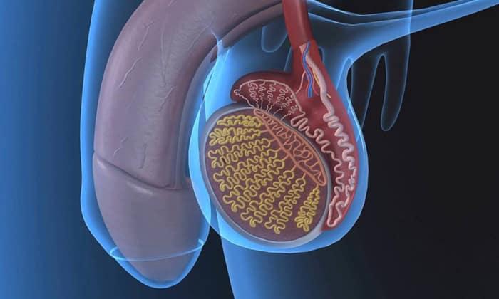 Папаверин позволяет снять спазмы при нарушении мужской потенции