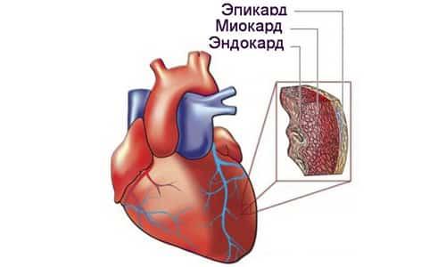 Использование Нейрокса позволяет улучшить электрическую активность в тканях сердца