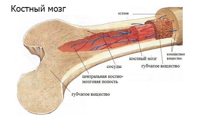Не стоит принимать анальгин, если есть нарушения работы костного мозга или присутствие в истории болезни случаев агранулоцитоза или других подобных расстройств (анемия, эозинофилия и др.)