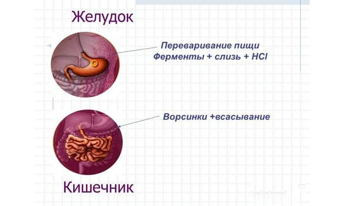 Препарат Креон показан к применению при непереваривании пищи, заболеваниях ЖКТ, недостаточной работе поджелудочной железы и др