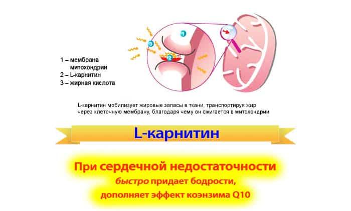 Средство не может быть назначено врачом, если пациент страдает непереносимостью основного компонента лекарства. Запретом для применения также становится повышенное содержание в организме карнитина