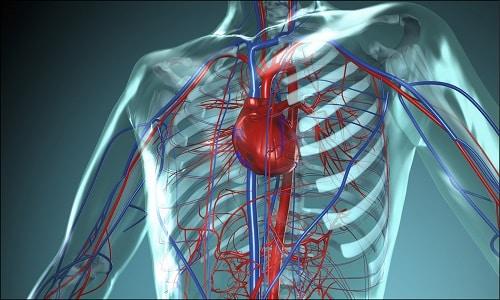 Фармакодинамика лекарства обеспечивает возврат венозной крови к сердечной мышце