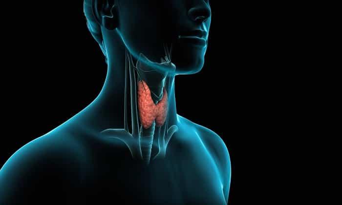 Медикамент задействуется в лечении щитовидной железы