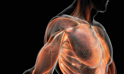 Л-карнитин повышает мышечную силу